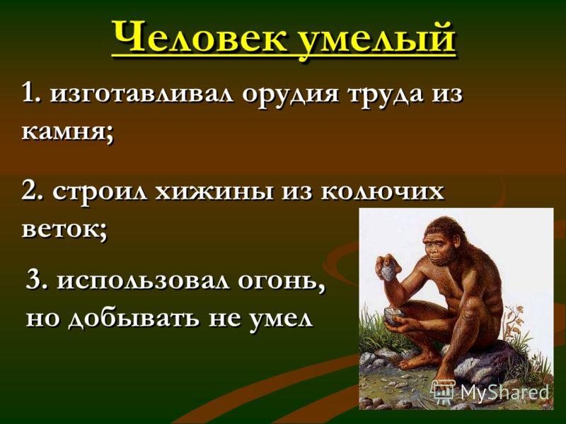 Человек умелый 1. изготавливал орудия труда из камня; 2. строил хижины из колючих веток; 1. изготавливал орудия труда из камня; 2. строил хижины из колючих веток; 3. использовал огонь, но добывать не умел