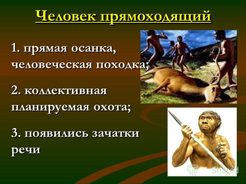 Человек прямоходящий 1. прямая осанка, человеческая походка; 2. коллективная планируемая охота; 3. появились зачатки речи 1. прямая осанка, человеческая походка; 2. коллективная планируемая охота; 3. появились зачатки речи