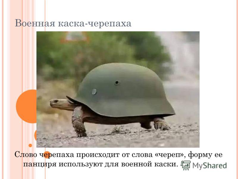 Военная каска-черепаха Слово черепаха происходит от слова «череп», форму ее панциря используют для военной каски.