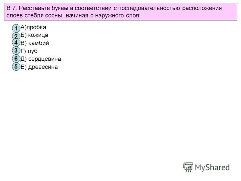 В 7. Расставьте буквы в соответствии с последовательностью расположения слоев стебля сосны, начиная с наружного слоя: А)пробка Б) кожица В) камбий Г) луб Д) сердцевина Е) древесина 1 2 3 4 5 6