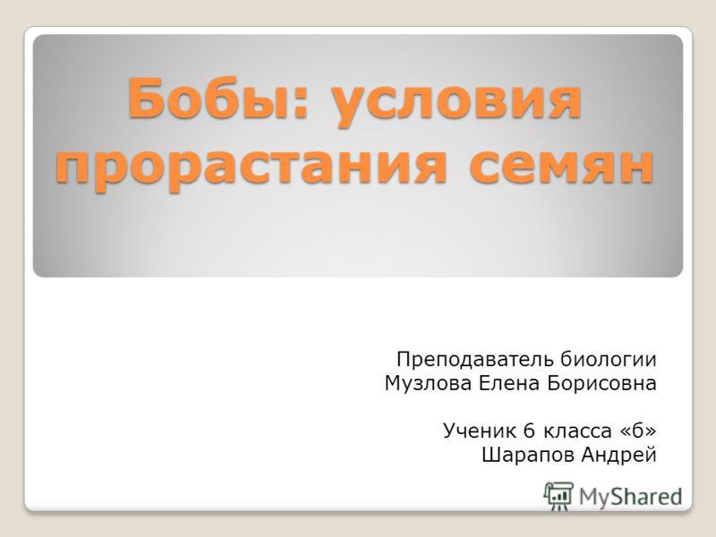 Бобы: условия прорастания семян Преподаватель биологии Музлова Елена Борисовна Ученик 6 класса «б» Шарапов Андрей