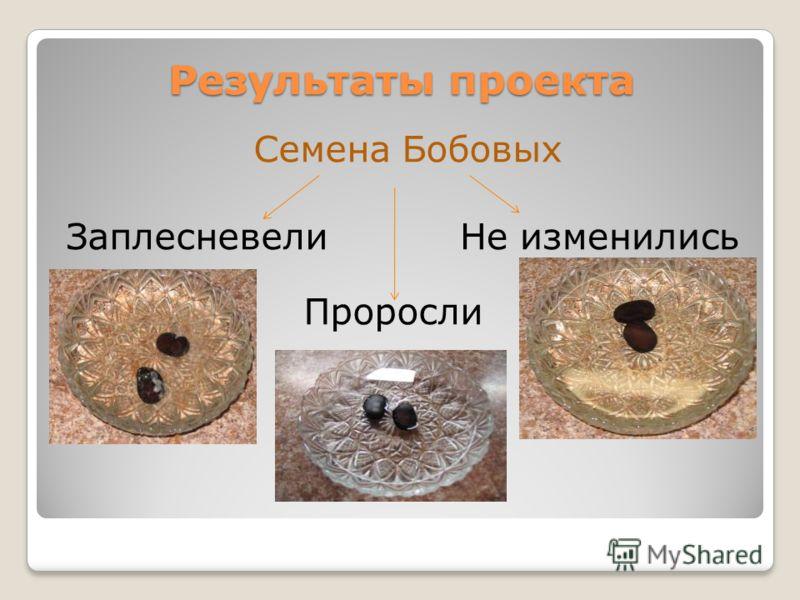 Результаты проекта Семена Бобовых Проросли ЗаплесневелиНе изменились