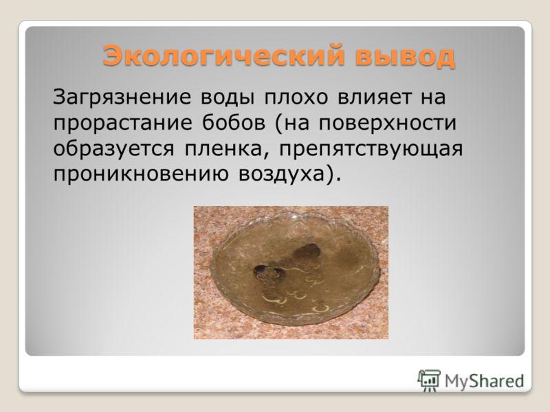 Экологический вывод Загрязнение воды плохо влияет на прорастание бобов (на поверхности образуется пленка, препятствующая проникновению воздуха).