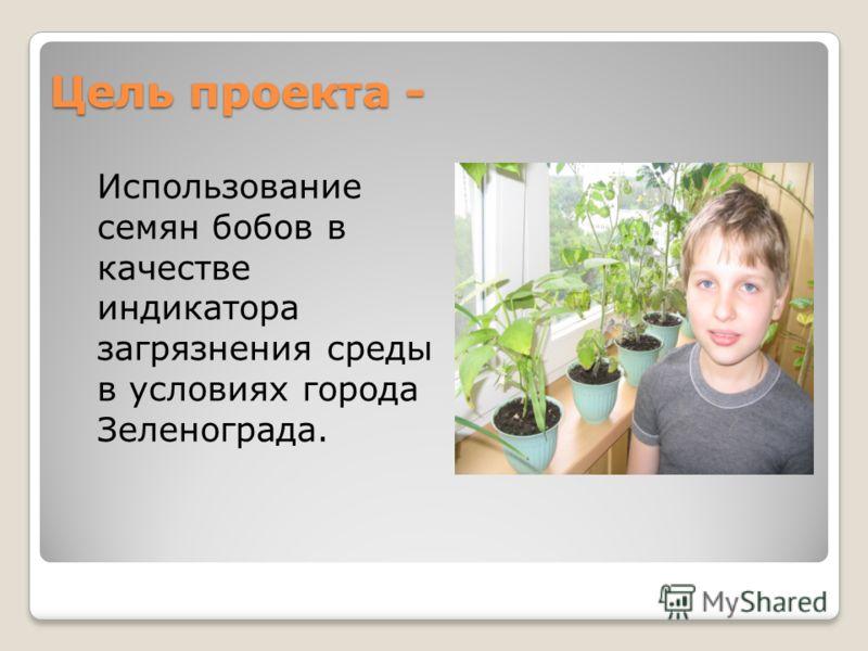 Цель проекта - Использование семян бобов в качестве индикатора загрязнения среды в условиях города Зеленограда.