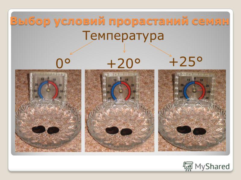 Выбор условий прорастаний семян Температура 0°+20° +25°
