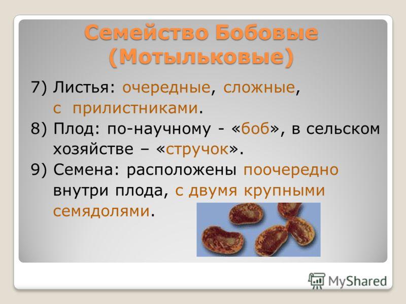7) Листья: очередные, сложные, с прилистниками. 8) Плод: по-научному - «боб», в сельском хозяйстве – «стручок». 9) Семена: расположены поочередно внутри плода, с двумя крупными семядолями. Семейство Бобовые (Мотыльковые)