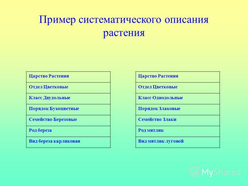 Царство Растения Отдел Цветковые <a href='http://www.myshared.ru/slide/224724/' title='семейства класса двудольные'>Класс Двудольные Порядок Букоцветн