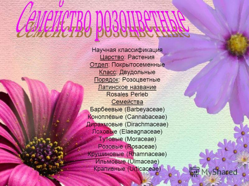 Научная классификация Царство: Растения Отдел: Покрытосеменные Класс: Двудольные Порядок: Розоцветные Латинское название Rosales Perleb Семейства Барбеевые (Barbeyaceae) Коноплёвые (Cannabaceae) Дирахмовые (Dirachmaceae) Лоховые (Elaeagnaceae) Тутовы