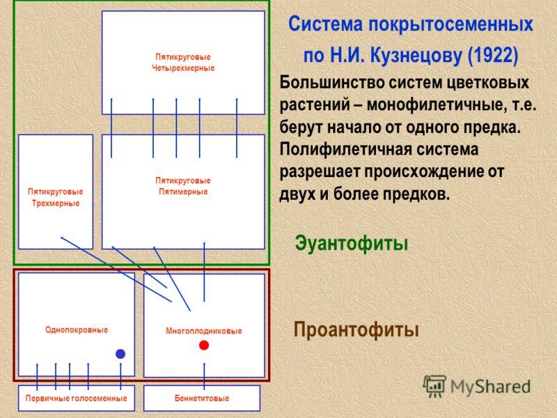Cистема покрытосеменных по Н.И. Кузнецову (1922) Большинство систем цветковых растений – монофилетичные, т.е. берут начало от одного предка. Полифилетичная система разрешает происхождение от двух и более предков. Однопокровные Многоплодниковые Первич