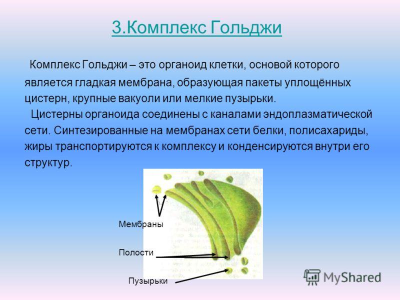 3.Комплекс Гольджи Комплекс Гольджи – это органоид клетки, основой которого является гладкая мембрана, образующая пакеты уплощённых цистерн, крупные вакуоли или мелкие пузырьки. Цистерны органоида соединены с каналами эндоплазматической сети. Синтези
