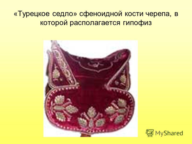 «Турецкое седло» сфеноидной кости черепа, в которой располагается гипофиз