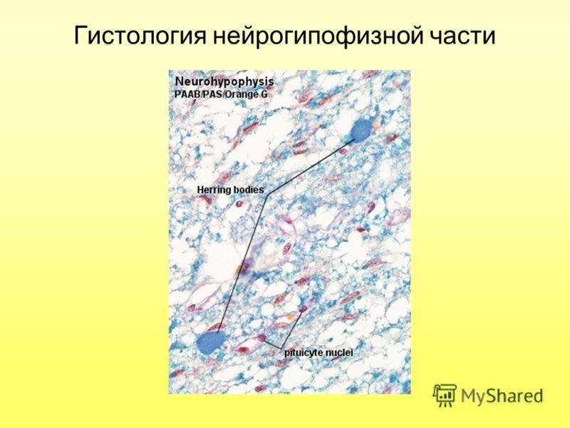 Гистология нейрогипофизной части