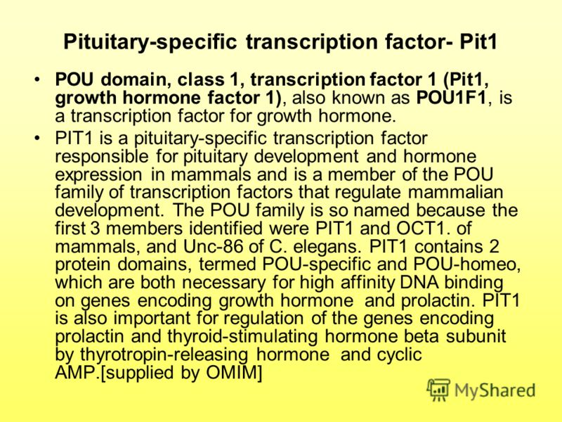Pituitary-specific transcription factor- Pit1 POU domain, class 1, transcription factor 1 (Pit1, growth hormone factor 1), also known as POU1F1, is a transcription factor for growth hormone. PIT1 is a pituitary-specific transcription factor responsib