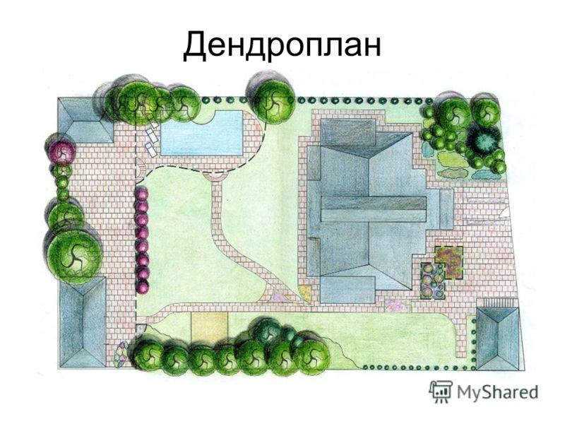 Дендроплан