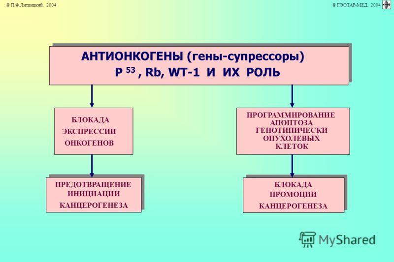 АНТИОНКОГЕНЫ (гены-супрессоры) P 53, Rb, WT-1 И ИХ РОЛЬ БЛОКАДА ЭКСПРЕССИИ ОНКОГЕНОВ ПРЕДОТВРАЩЕНИЕ ИНИЦИАЦИИ КАНЦЕРОГЕНЕЗА ПРОГРАММИРОВАНИЕ АПОПТОЗА ГЕНОТИПИЧЕСКИ ОПУХОЛЕВЫХ КЛЕТОК БЛОКАДА ПРОМОЦИИ КАНЦЕРОГЕНЕЗА © П.Ф.Литвицкий, 2004 © ГЭОТАР-МЕД, 2