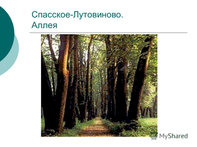 Спасское-Лутовиново. Аллея