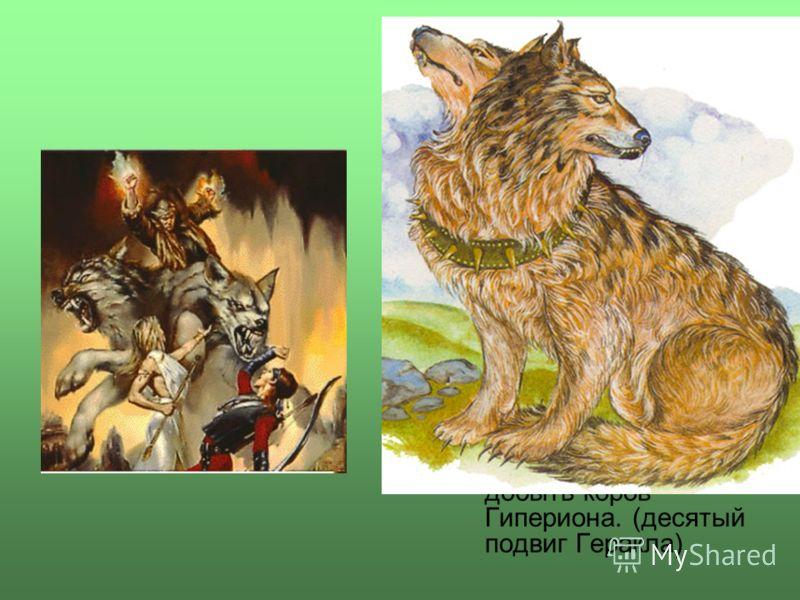 ОрфОрф (Орт, Ортр) - в греческой мифологии страшный двуглавый пес, охраняющий коров великана Гериона, которые паслись на зеленых, обдуваемых мягким западным ветром лугах острова Эрифия. Сын Тифона и Ехидны, брат Цербера, Химеры, немейского льва, фива