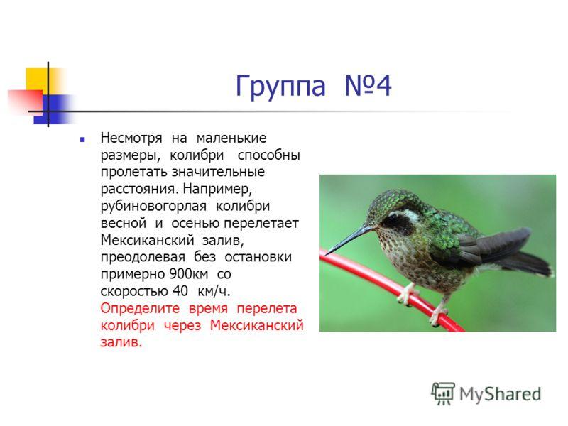 Группа 4 Несмотря на маленькие размеры, колибри способны пролетать значительные расстояния. Например, рубиновогорлая колибри весной и осенью перелетает Мексиканский залив, преодолевая без остановки примерно 900км со скоростью 40 км/ч. Определите врем