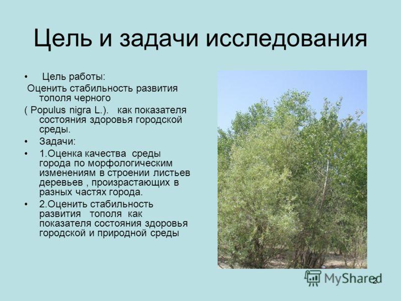 2 Цель и задачи исследования Цель работы: Оценить стабильность развития тополя черного ( Populus nigra L.). как показателя состояния здоровья городской среды. Задачи: 1.Оценка качества среды города по морфологическим изменениям в строении листьев дер