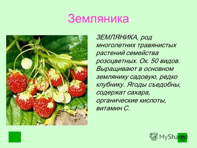 Земляника. ЗЕМЛЯНИКА, род многолетних травянистых растений семейства розоцветных. Ок. 50 видов. Выращивают в основном землянику садовую, редко клубнику. Ягоды съедобны, содержат сахара, органические кислоты, витамин С.