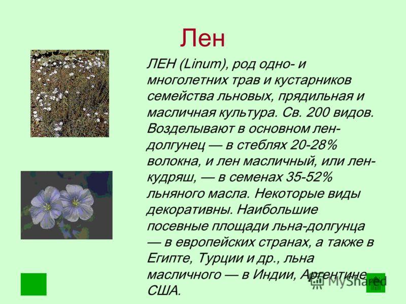 Лен ЛЕН (Linum), род одно- и многолетних трав и кустарников семейства льновых, прядильная и масличная культура. Св. 200 видов. Возделывают в основном лен- долгунец в стеблях 20-28% волокна, и лен масличный, или лен- кудряш, в семенах 35-52% льняного