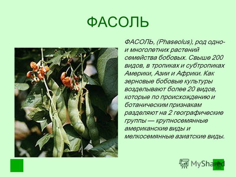 ФАСОЛЬ ФАСОЛЬ, (Phaseolus), род одно- и многолетних растений семейства бобовых. Свыше 200 видов, в тропиках и субтропиках Америки, Азии и Африки. Как зерновые бобовые культуры возделывают более 20 видов, которые по происхождению и ботаническим призна