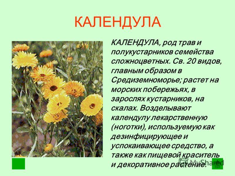 КАЛЕНДУЛА КАЛЕНДУЛА, род трав и полукустарников семейства сложноцветных. Св. 20 видов, главным образом в Средиземноморье; растет на морских побережьях, в зарослях кустарников, на скалах. Возделывают календулу лекарственную (ноготки), используемую как