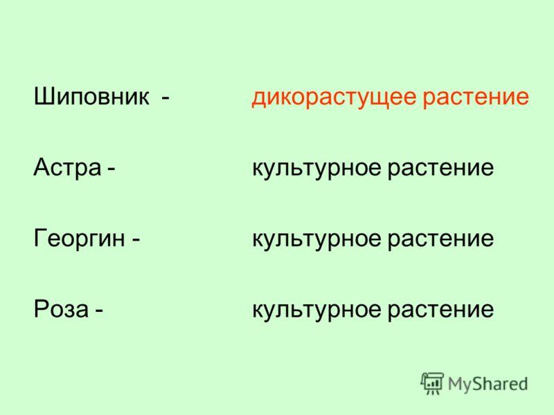 Шиповник - Астра - Георгин - Роза - дикорастущее растение культурное растение