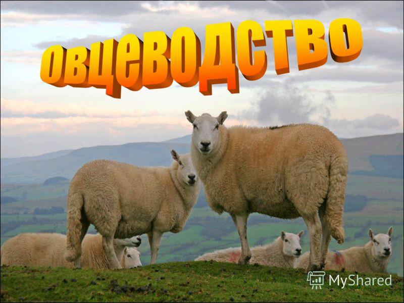 Скачать книгу овцеводство