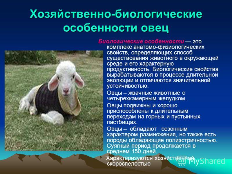 Хозяйственно-биологические особенности овец Биологические особенности это комплекс анатомо-физиологических свойств, определяющих способ существования животного в окружающей среде и его характерную продуктивность. Биологические свойства вырабатываются