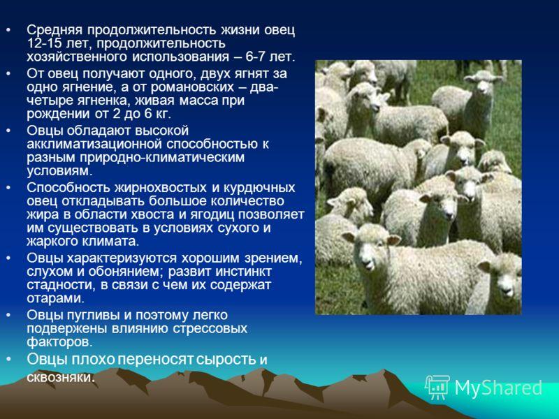 Средняя продолжительность жизни овец 12-15 лет, продолжительность хозяйственного использования – 6-7 лет. От овец получают одного, двух ягнят за одно ягнение, а от романовских – два- четыре ягненка, живая масса при рождении от 2 до 6 кг. Овцы обладаю