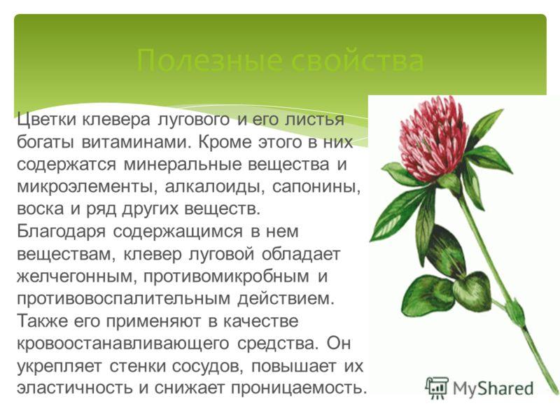 Цветки клевера лугового и его листья богаты витаминами. Кроме этого в них содержатся минеральные вещества и микроэлементы, алкалоиды, сапонины, воска и ряд других веществ. Благодаря содержащимся в нем веществам, клевер луговой обладает желчегонным, п