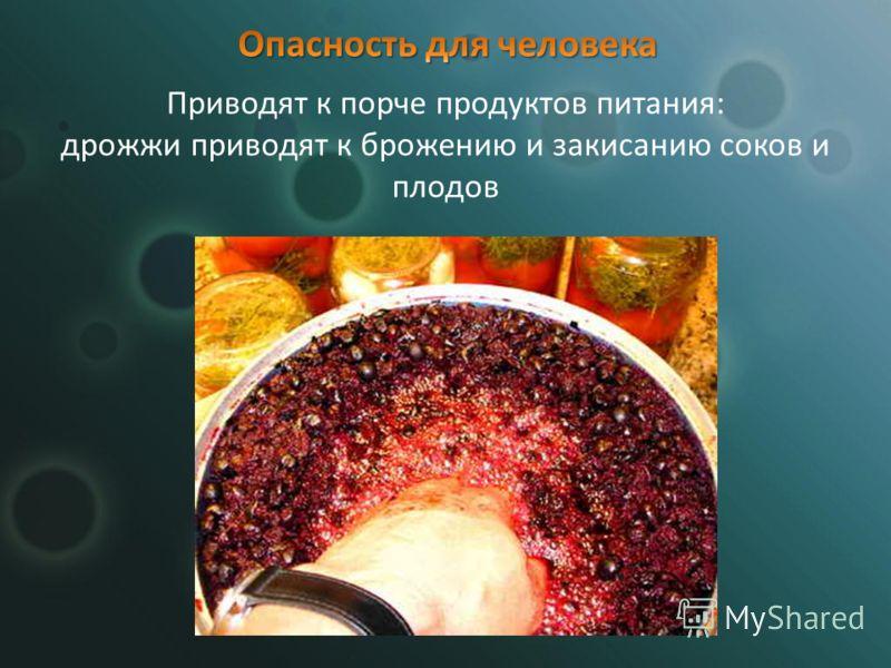 Приводят к порче продуктов питания: дрожжи приводят к брожению и закисанию соков и плодов
