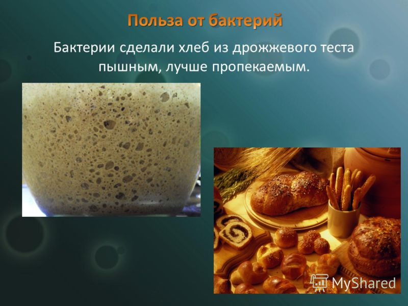 Бактерии сделали хлеб из дрожжевого теста пышным, лучше пропекаемым.