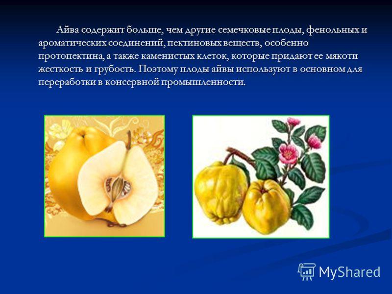 Айва содержит больше, чем другие семечковые плоды, фенольных и ароматических соединений, пектиновых веществ, особенно протопектина, а также каменистых клеток, которые придают ее мякоти жесткость и грубость. Поэтому плоды айвы используют в основном дл