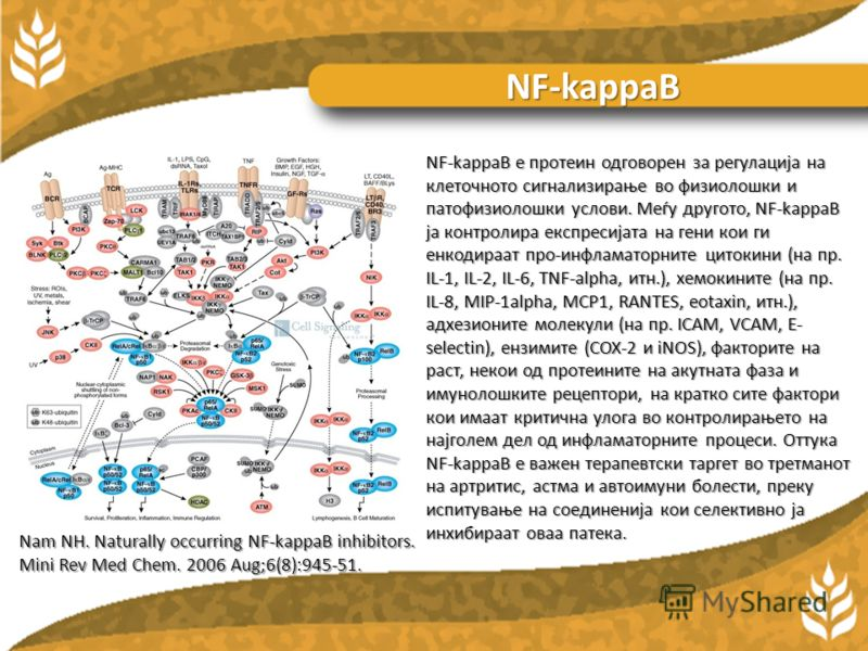 Витаминот Ц, покрај неговата улога како антиоксиданс, е откриено дека има голем број ефекти врз хистаминската секреција. Тој ја спречува хистаминската секреција од страна на леукоцитите и ја забрзува неговата разградба. Хистаминските нивоа во плазма