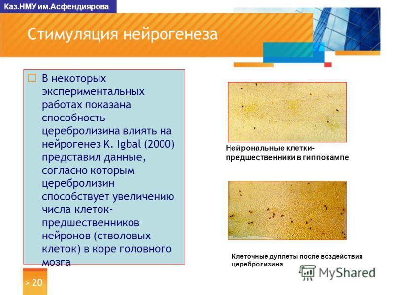 Нейрогенез фото