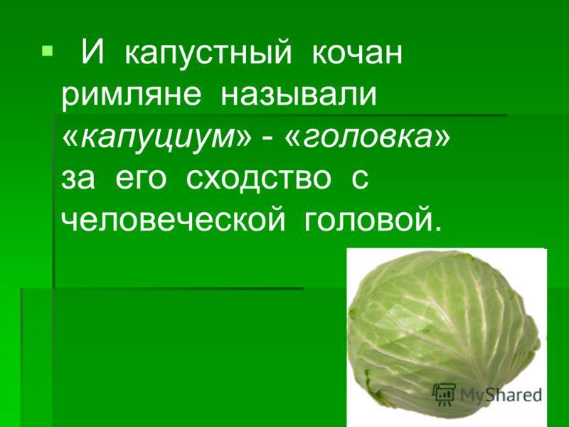 И капустный кочан римляне называли «капуциум» - «головка» за его сходство с человеческой головой.