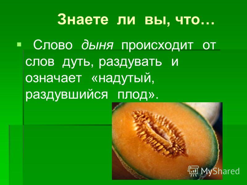 Знаете ли вы, что… Слово дыня происходит от слов дуть, раздувать и означает «надутый, раздувшийся плод».