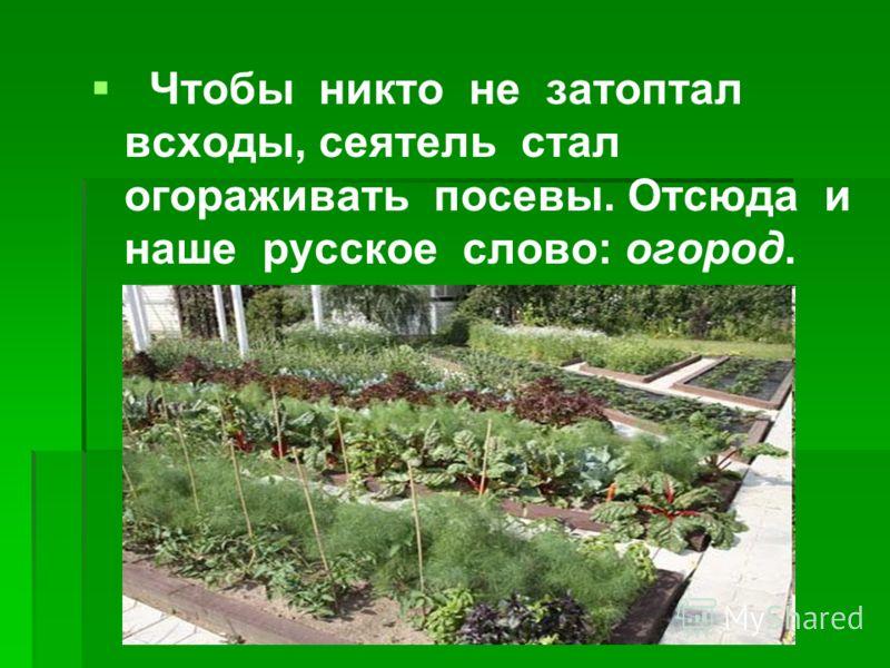 Чтобы никто не затоптал всходы, сеятель стал огораживать посевы. Отсюда и наше русское слово: огород.