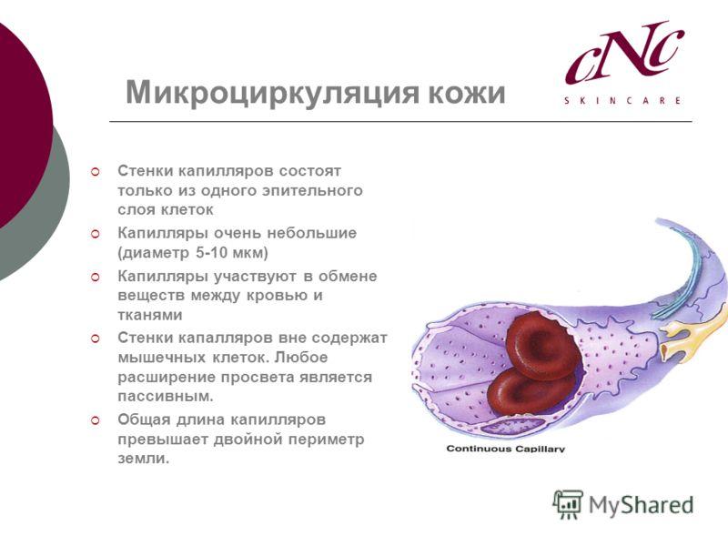 Микроциркуляция кожи Стенки капилляров состоят только из одного эпительного слоя клеток Капилляры очень небольшие (диаметр 5-10 мкм) Капилляры участвуют в обмене веществ между кровью и тканями Стенки капалляров вне содержат мышечных клеток. Любое рас