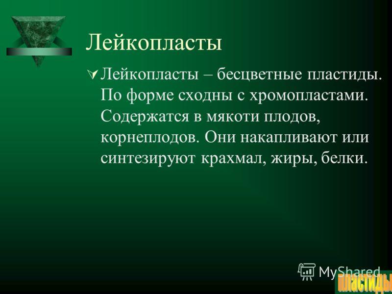 Хлоропласты Хлоропласты – их зелёный цвет обусловлен пигментом хлорофиллом, который улавливает солнечную энергию, переводя её в энергию механических связей. Тело окружено двухслойной оболочкой. На мембранах гран протекает световая фаза фотосинтеза, а