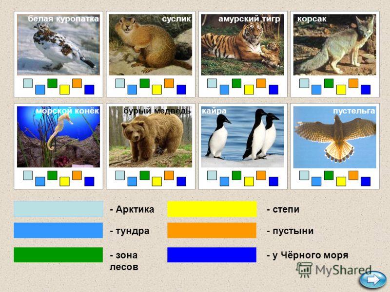 - Арктика - тундра - зона лесов - степи - пустыни - у Чёрного моря лемминг дрофа медузалось песецтюленьсайгак белый медведь