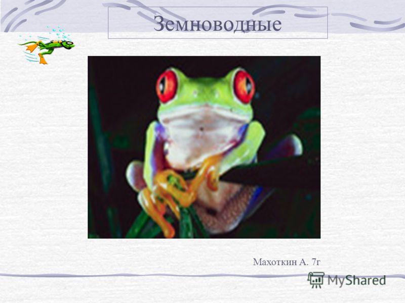 Земноводные Махоткин А. 7г