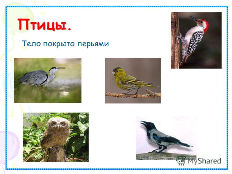 Птицы. Птицы. Тело покрыто перьями