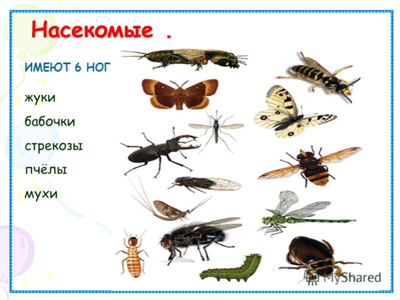 Насекомые. ИМЕЮТ 6 НОГ. жуки бабочки стрекозы пчёлы мухи