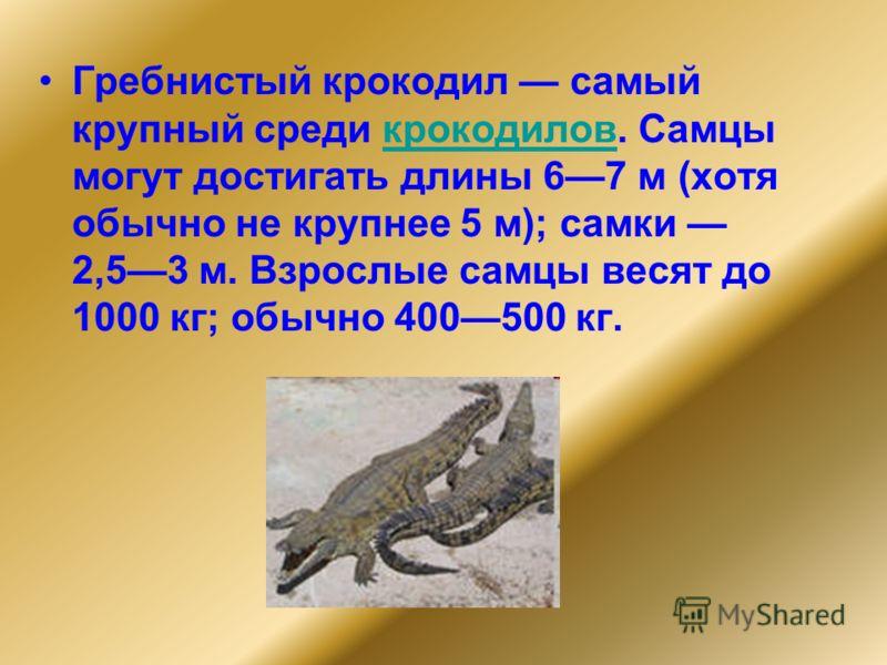 Гребнистый крокодил самый крупный среди крокодилов. Самцы могут достигать длины 67 м (хотя обычно не крупнее 5 м); самки 2,53 м. Взрослые самцы весят до 1000 кг; обычно 400500 кг.крокодилов