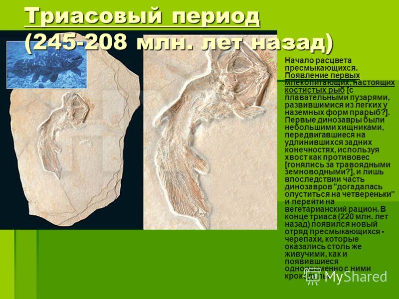 Триасовый период (245-208 млн. лет назад) Начало расцвета пресмыкающихся. Появление первых млекопитающих, настоящих костистых рыб [с плавательными пузарями, развившимися из легких у наземных форм прарыб?]. Первые динозавры были небольшими хищниками,