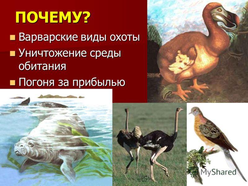 ПОЧЕМУ? Варварские виды охоты Варварские виды охоты Уничтожение среды обитания Уничтожение среды обитания Погоня за прибылью Погоня за прибылью