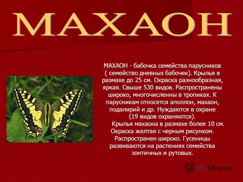 МАХАОН - бабочка семейства парусников ( семейство дневных бабочек). Крылья в размахе до 25 см. Окраска разнообразная, яркая. Свыше 530 видов. Распространены широко, многочисленны в тропиках. К парусникам относятся аполлон, махаон, подалирий и др. Нуж